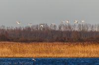Lauwersmeer20180107_0007