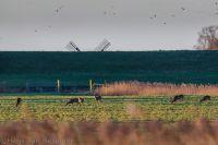 Lauwersmeer20180107_0011